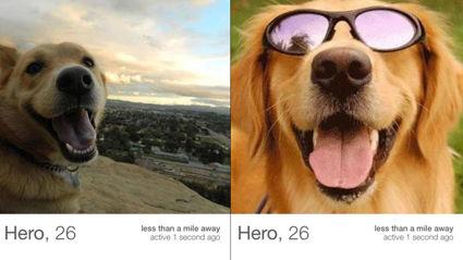 Dog On Tinder